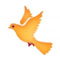 白鸽app苹果版ios软件下载安装 v1.0.0
