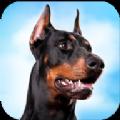 杜宾狗模拟器游戏安卓中文版 v1.0